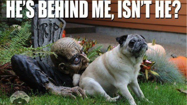 behind me halloween meme