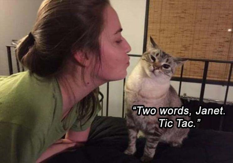 Funny Cat Meme Pictures : Top funny cat meme funny cat dompict