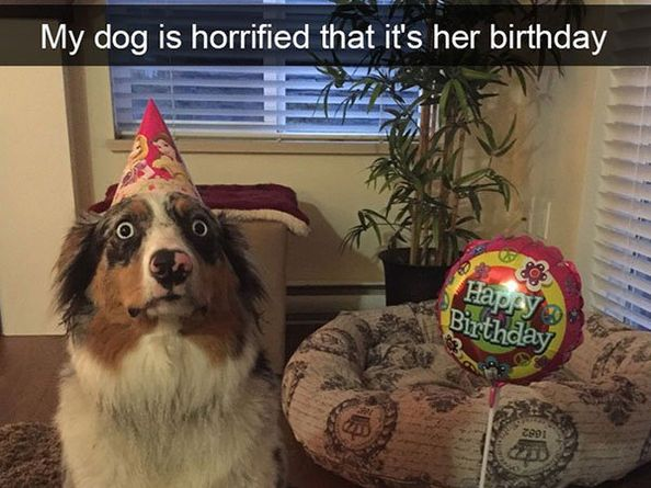 Snapdogs 30 Funny Dog Pictures Of Snapchat Funnyfoto Funny