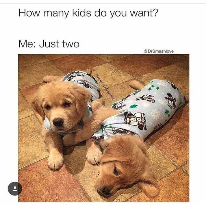 Best 25 Funny pictures ideas on Pinterest  Funny school