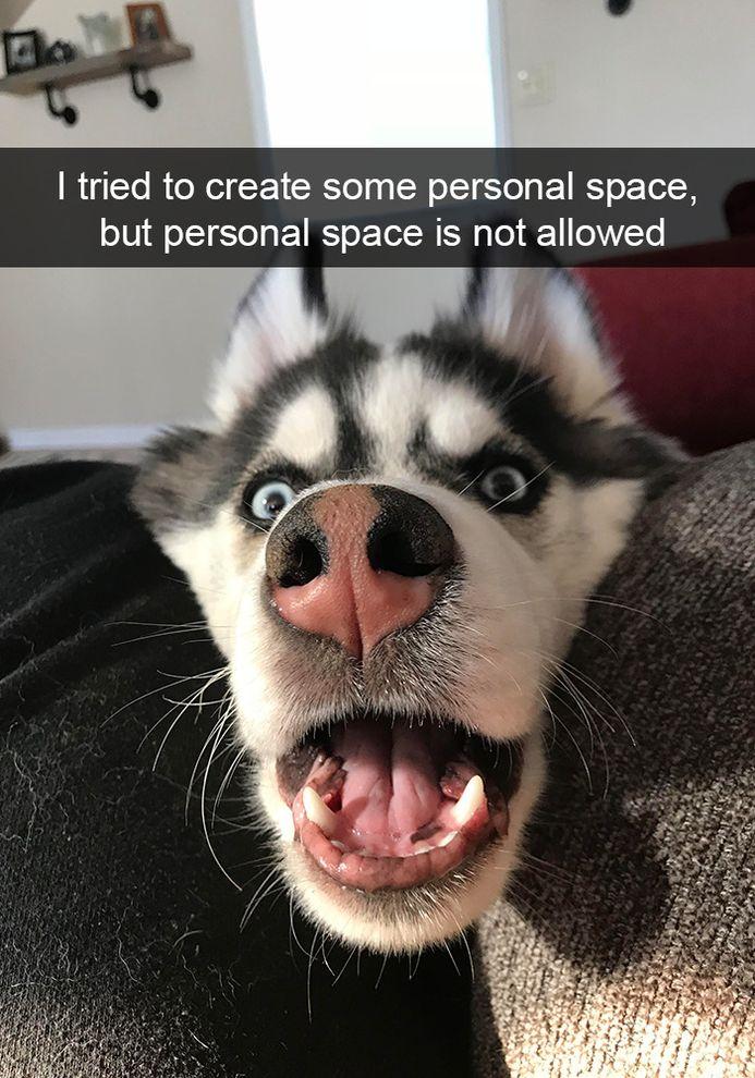 Image of: Snap Chats Funny Snapchats Dog Photo Funnyfoto Funny Pictures Funny Snapchats Dog Photo 50 Pics Funnyfoto Funny Pictures