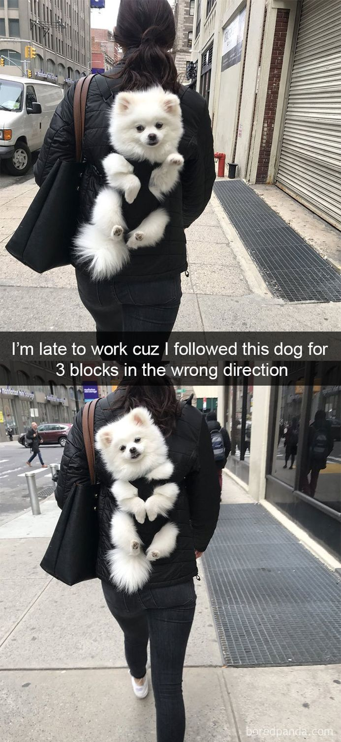Image of: Followers Funny Snapchats Dog Photo Funny Funny Snapchats Dog Photo 40 Pics Funnyfoto Funny Pictures